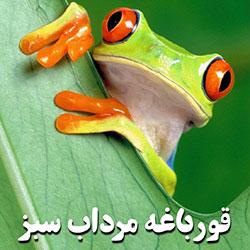 قورباغه سبز مرداب